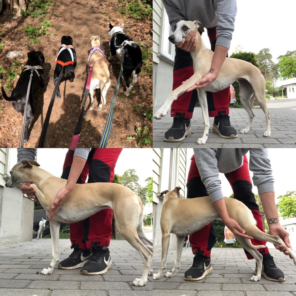 Opp&Hopp Hund- og Fysio