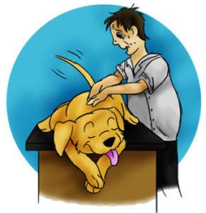 Hundemassasje